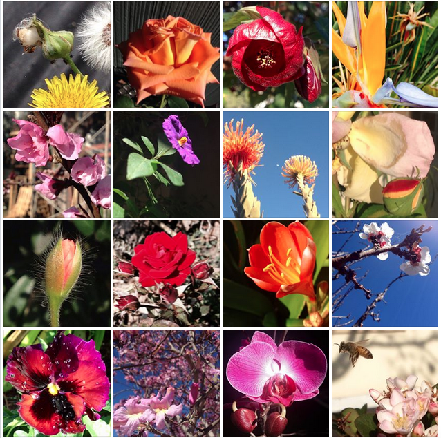 30 day challenge flower photography